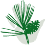Evergreen PT Specialists Logo